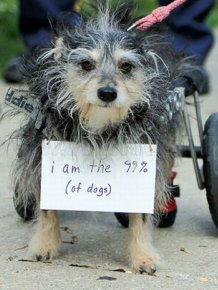The Dogs Of Occupy Wall Street