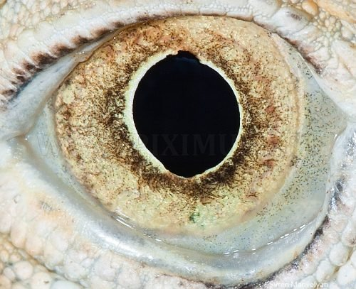 Eyes of animals closely