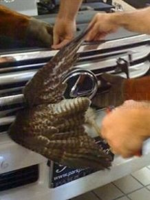 Birds also tend to luxury from Lexus