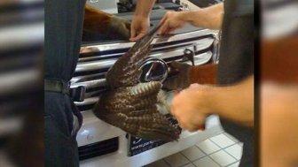Birds also tend to luxury from Lexus