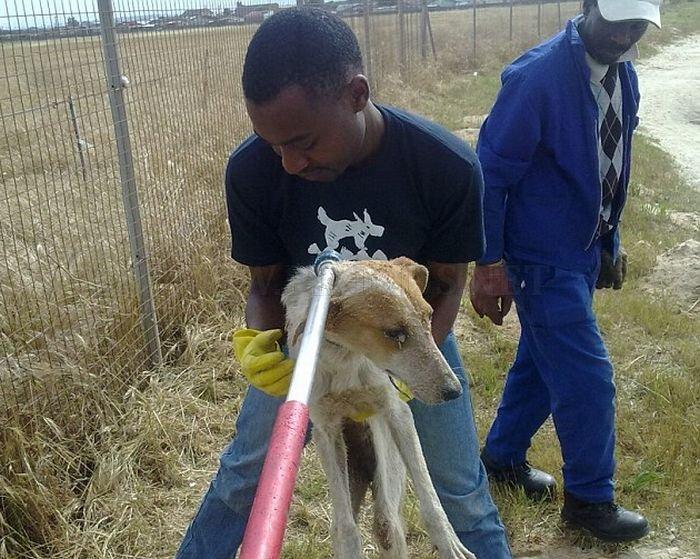 Σκύλος Buried Alive στη Νότιο Αφρική