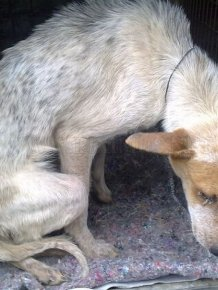 Dog Buried Alive in South Africa
