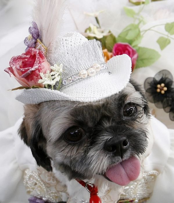 Dressed Up Dogs