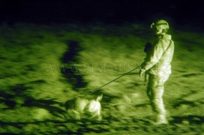 Military Dogs at Night