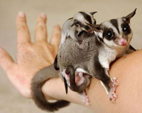 Tiny cute animals, part 2
