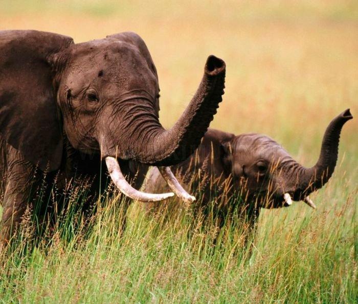 Amazing Animal Pictures | Animals