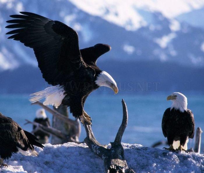 Amazing Animal Pictures Animals