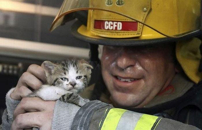 Animals Being Rescued