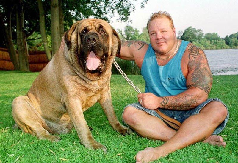 Abnormaly μεγάλα ζώα