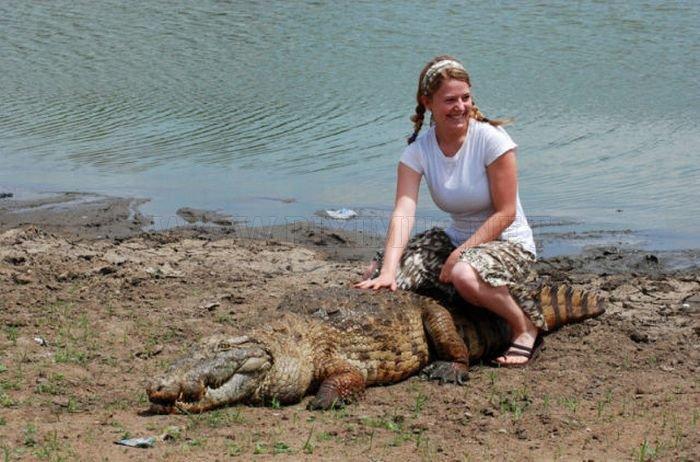 Paga Pond Crocodile στην Γκάνα.  Για Γενναίος τουρίστες Μόνο