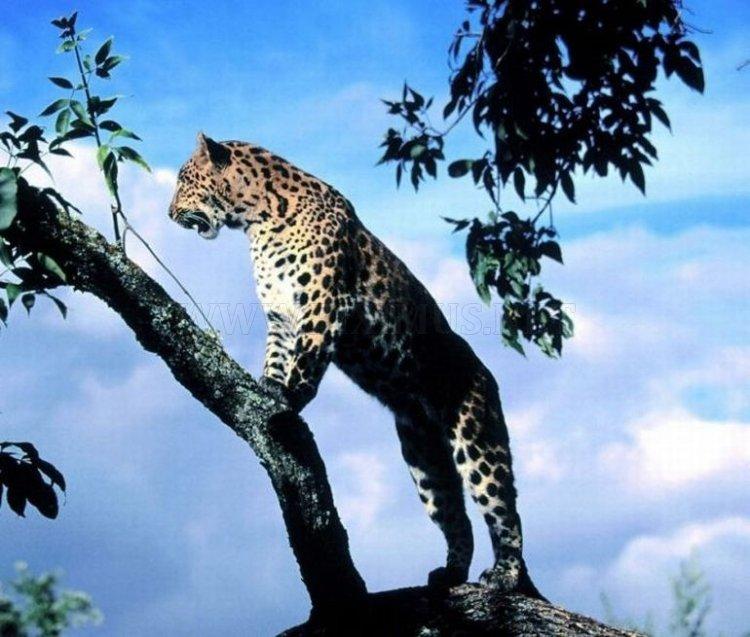 Animal Planet, part 2