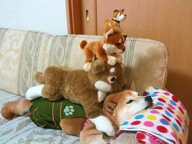 Funny Animals, part 38