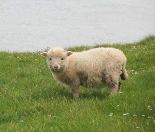 Tiny cute animals, part 3