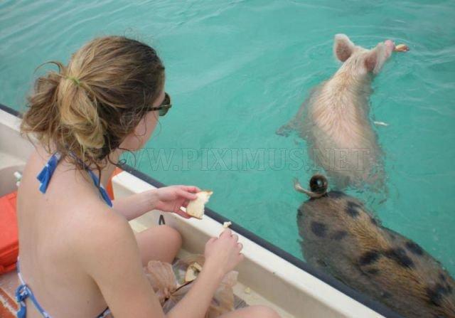 Unusual Tourists Invade Bahamas