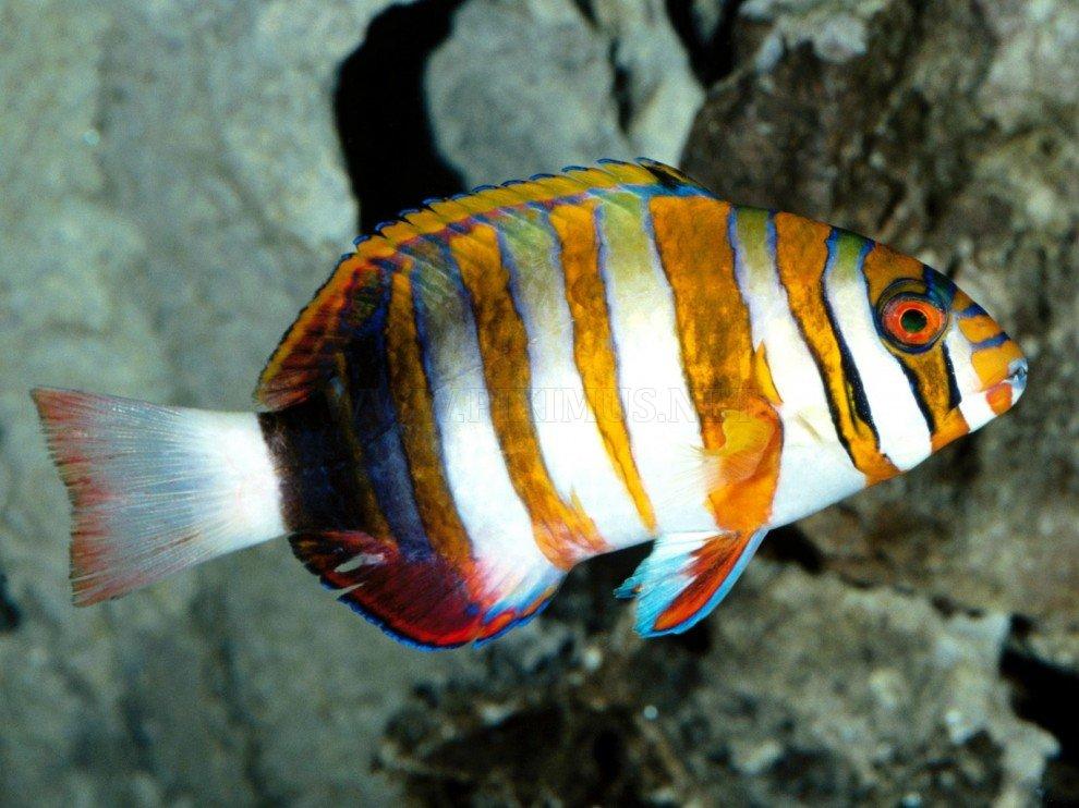 Ομορφιά του υποβρύχιου κόσμου