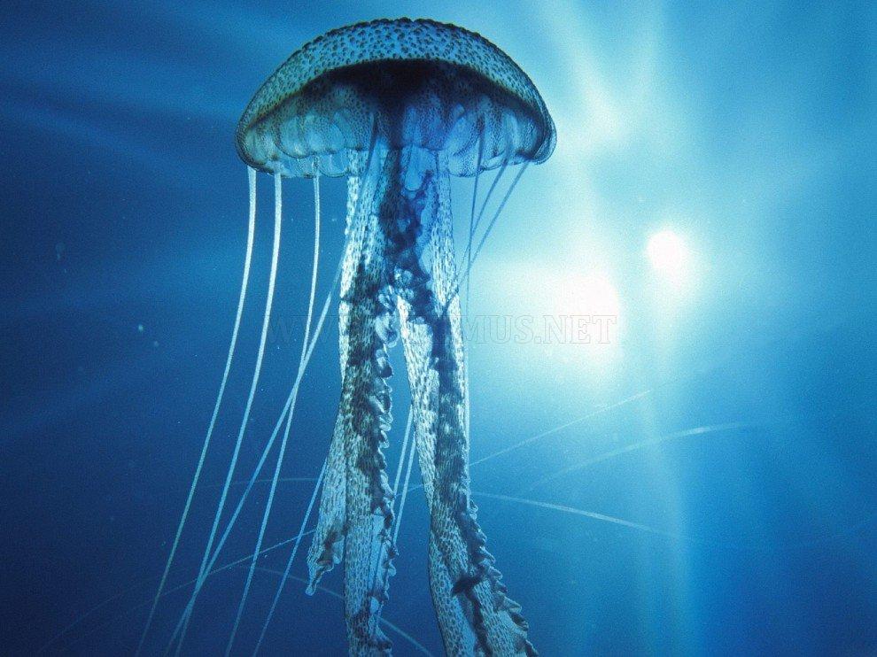 Beauty of the underwater world