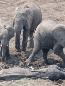 Dramatic Rescue of a Baby Elephant and Its Mother
