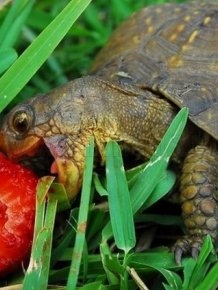 Turtles eating things