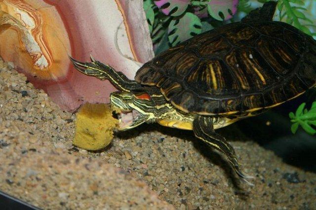 Turtles eating things