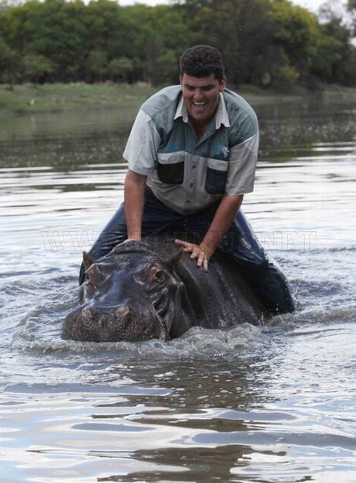 Marius Els killed by His Pet Hippo
