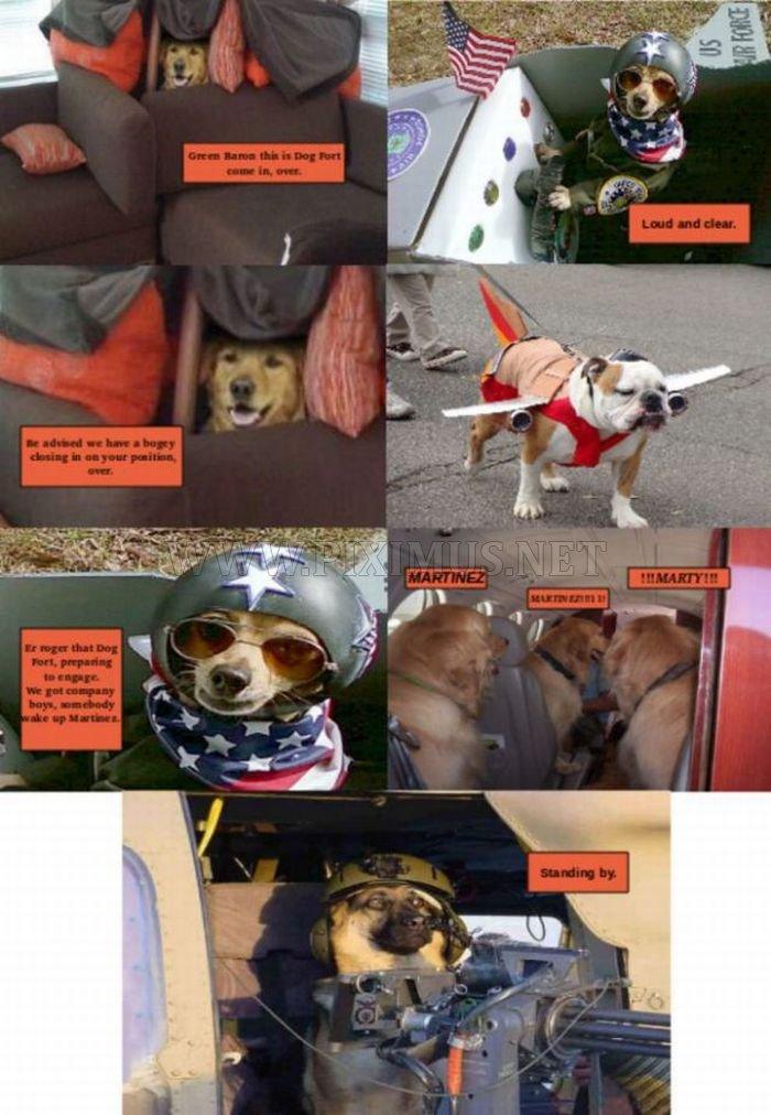 Dog Fort comics