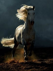 Arab and Andalusian horse