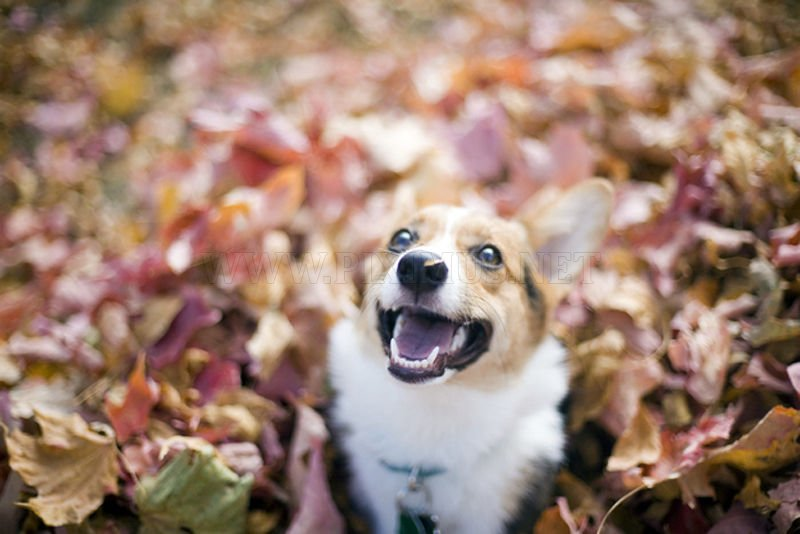 Dogs play in leaves