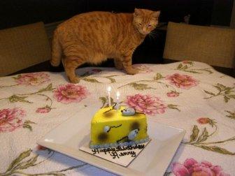 Cats Birthday Party