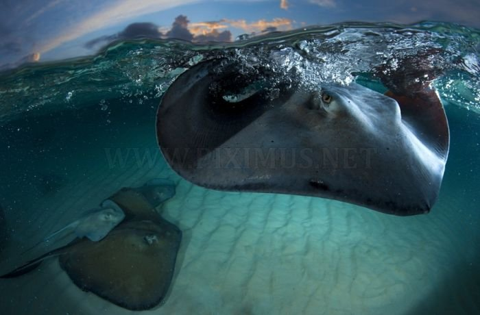 National Geographic Photo Contest 2011 , part 2