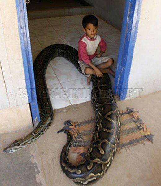 16-Foot Python Little Boy's Best Friend