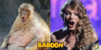 Animals That Look Like Taylor Swift