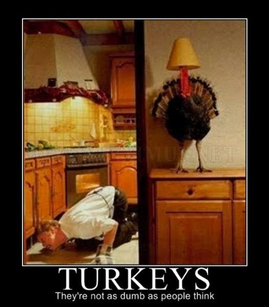 Thanksgiving Day Demotivational Posters