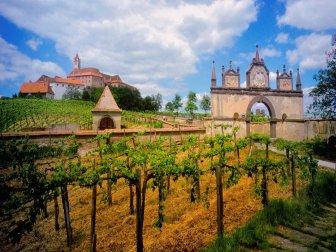 Vineyards Photos
