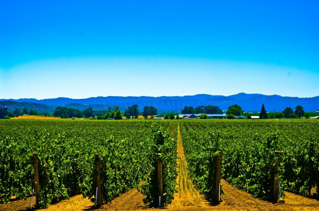 Vineyards Photos