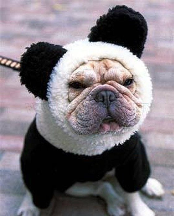 Animals with I-Want-to-Kill-Myself Look