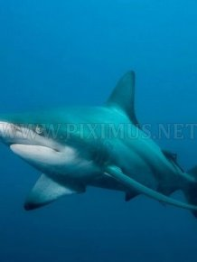 Shark photos