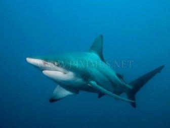 Shark photos