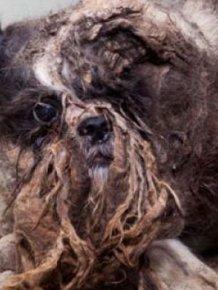 Dog's First Haircut
