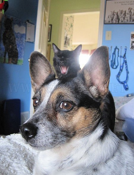 Adorable Cats and Dogs Photobomb Each Other