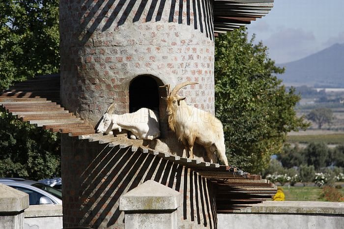 The Goat Tower