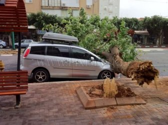Tree destroys car