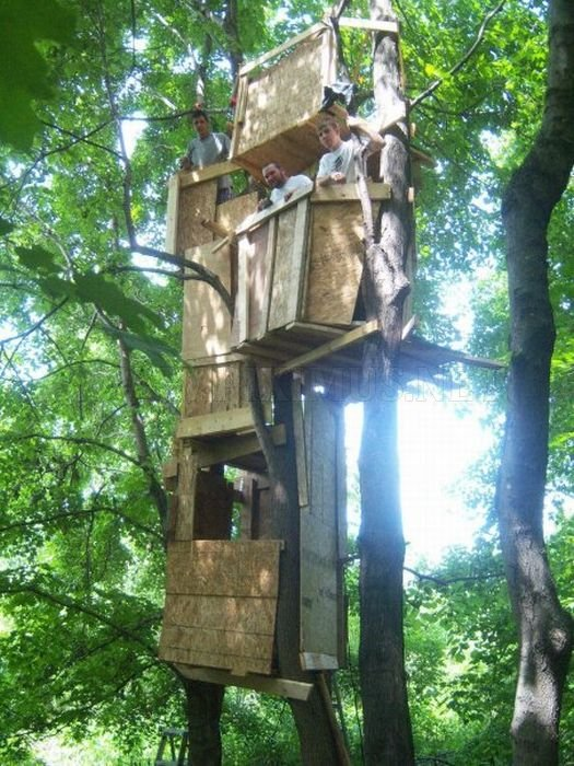 Construction of a Tree Fort