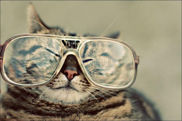 100 Cat Photos
