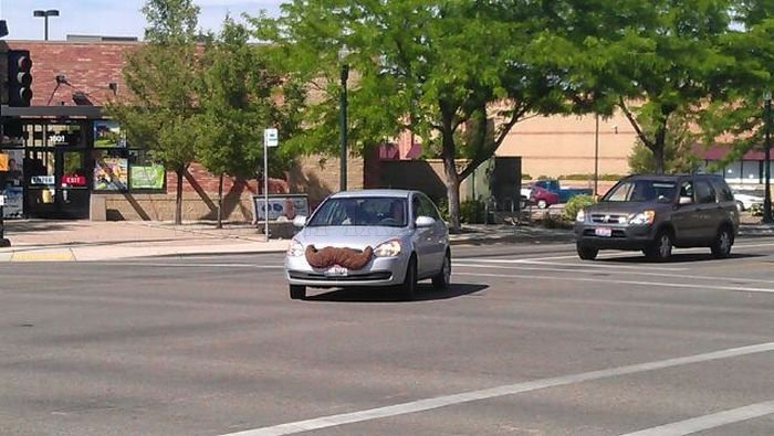 Cars with Mustaches