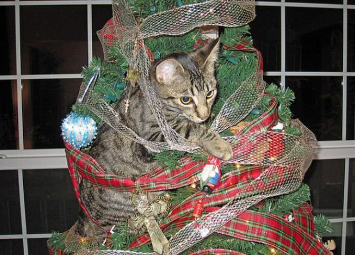 Cats Hate Christmas
