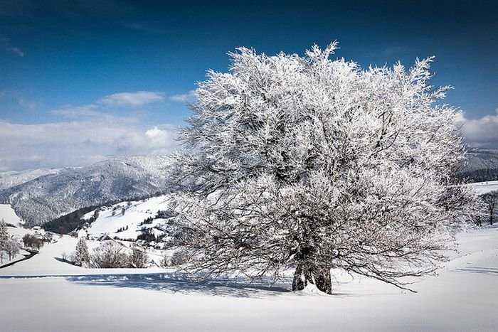Beautiful Winter Photography