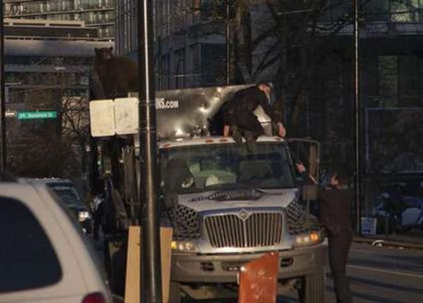 18 Month Old Bear Cub Captured In Down Town Vancouver