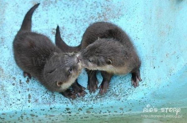 Cute Animals, part 2