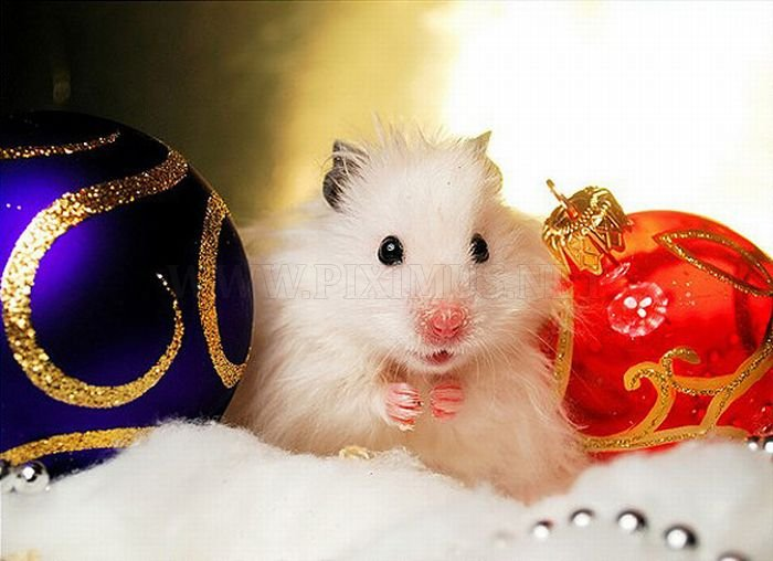 Cute Animals Dressed For Christmas