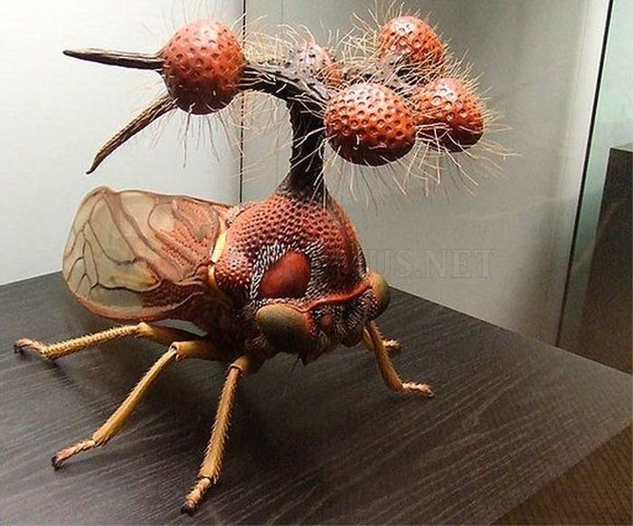 The ugliest insect in the World